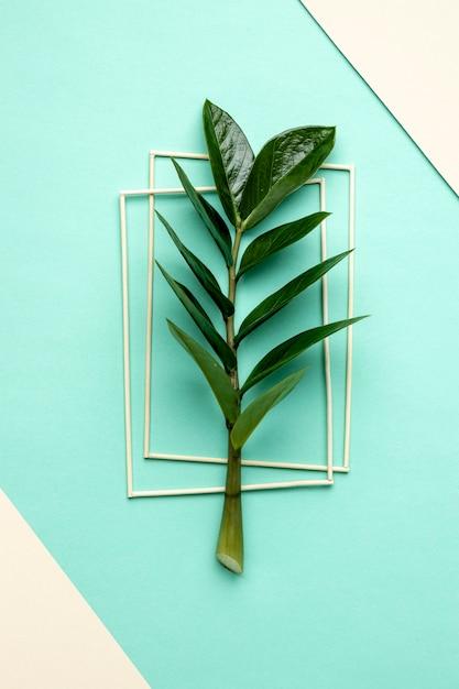 フラットレイグリーン植物組成 無料写真