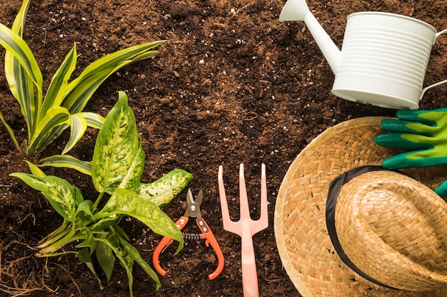 Flat lay of green plant and garden equipment Free Photo