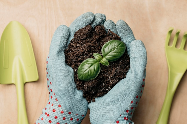 Flat lay of hands with gloves holding soil and plant Premium Photo