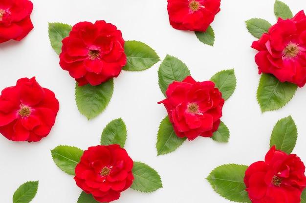 Плоская композиция айсберга с розами и листьями Бесплатные Фотографии