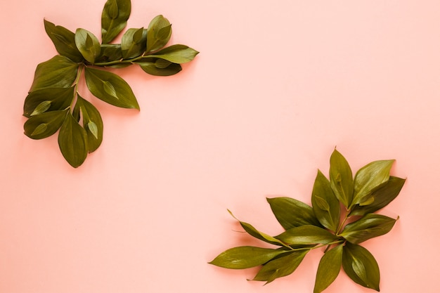 Flat lay of leaves with copyspace Free Photo