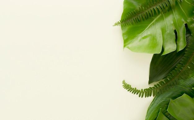 Lay piatto di molte foglie e felci Foto Gratuite