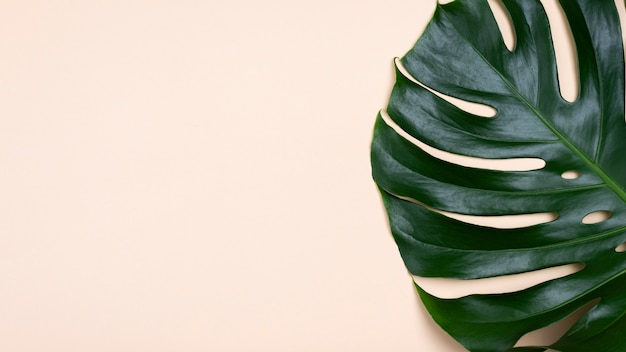 Flat lay of monstera leaf with copy space Free Photo