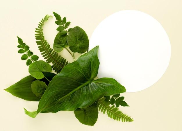 Плоская планировка ассортимента листьев Premium Фотографии