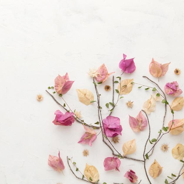 コピースペースのある秋の花のフラットレイ 無料写真