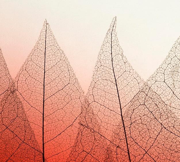 Плоская планировка цветных полупрозрачных листьев пластинки текстуры Бесплатные Фотографии