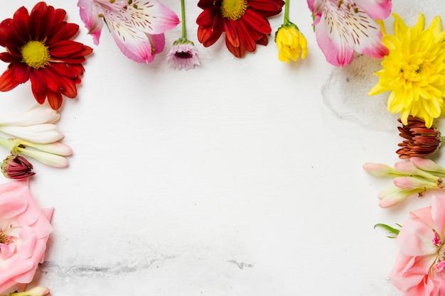 カラフルな春の花のフラットレイアウト 無料写真