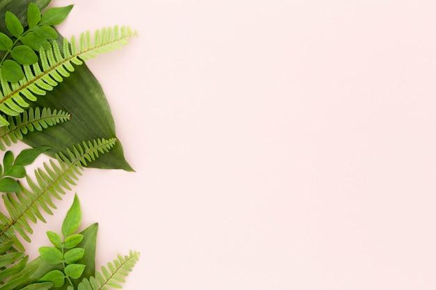 고사리와 잎 복사 공간의 평평한 누워 무료 사진