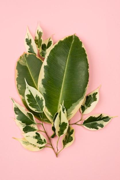 식물 잎의 평평한 누워 무료 사진