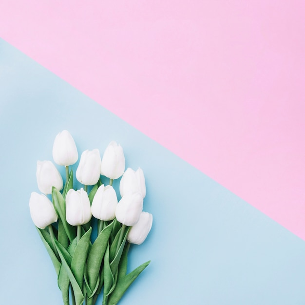 flat lay of pretty tulips bouquet on blue and pink background with