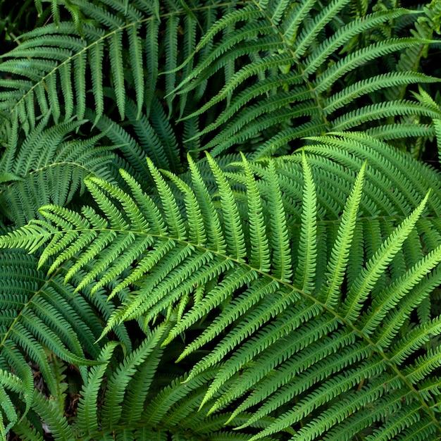 Плоская планировка тропических листьев Бесплатные Фотографии