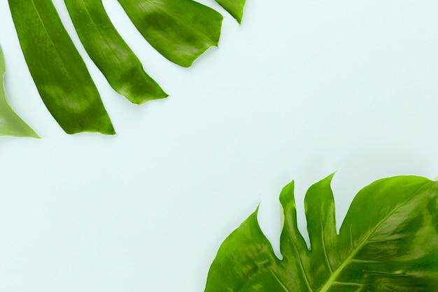 Плоская планировка из двух листьев монстеры с копией пространства Бесплатные Фотографии