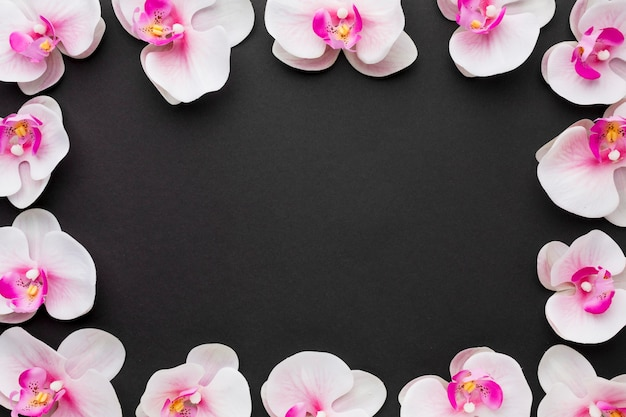Flat lay orchids frame Free Photo