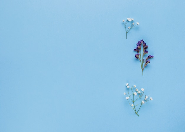 Flat lay ornamental flowers with copy space Free Photo