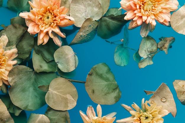 Flat lay pale chrysanthemums in blue water Free Photo