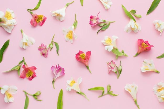 Flat lay pink arrangementof alstroemeria Premium Photo