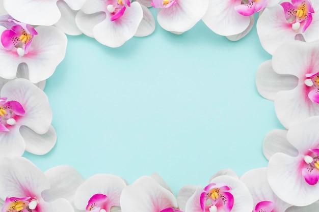 フラット横たわっていたピンクの蘭フレーム 無料写真
