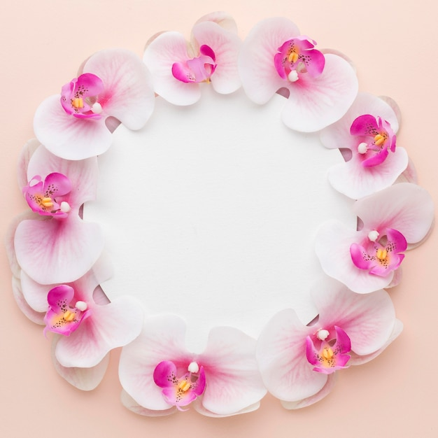 Flat lay pink orchids with black circle Premium Photo