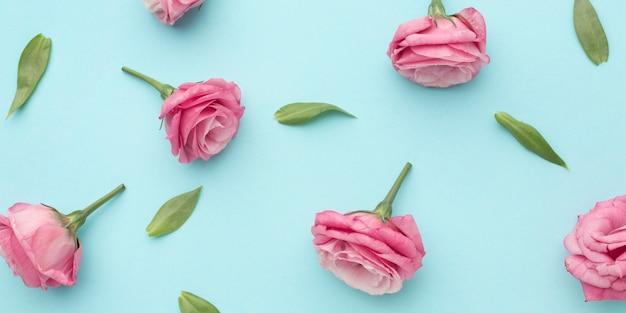 Плоские розовые розы Premium Фотографии