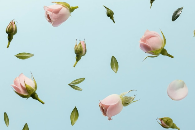 Flat lay of pink spring roses Free Photo