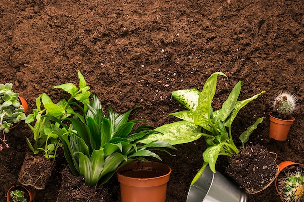 Flat lay of plants and gardening tools with copyspace Free Photo
