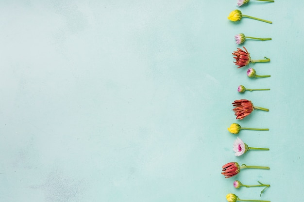 Flat lay of spring daisies and roses with copy space Free Photo