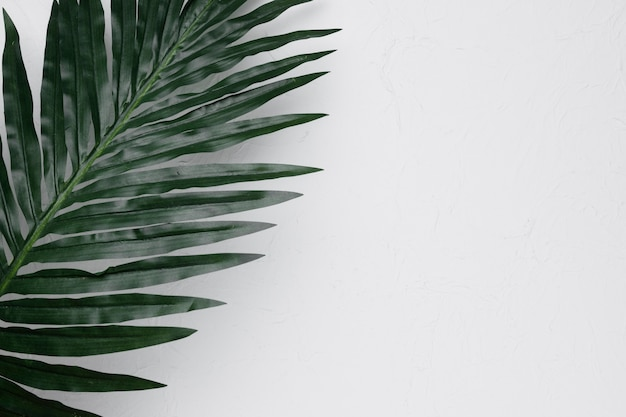 Flat lay of tropical leaf with copyspace Free Photo