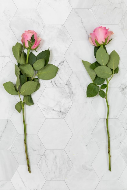 Flat lay of two roses Free Photo