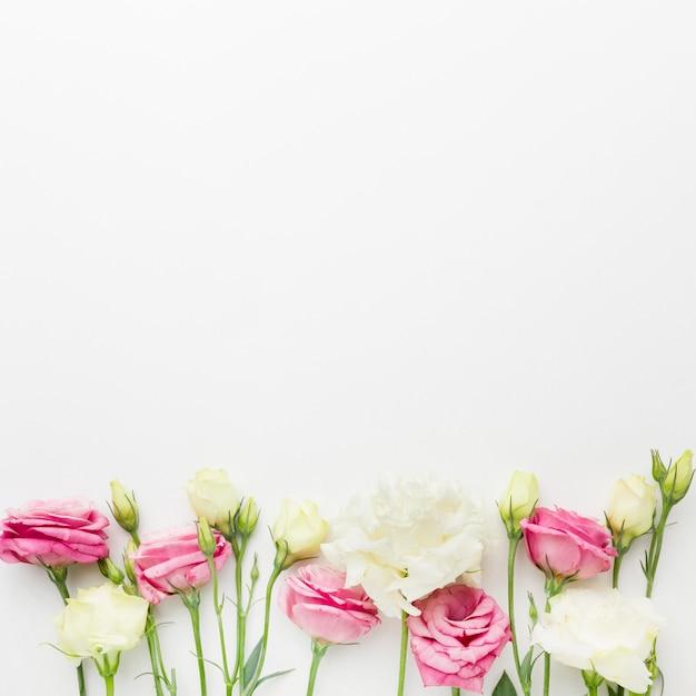 복사 공간이있는 평평한 흰색과 분홍색 미니 장미 프리미엄 사진