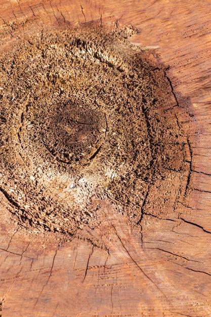 Lay piatto di texture di legno Foto Gratuite