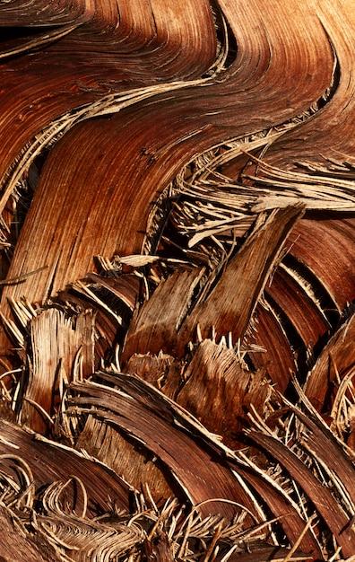 평평하다 나무 구성 무료 사진