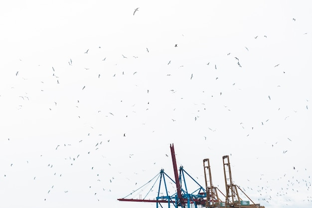 Flock of birds flying in sky with harbor crane Free Photo