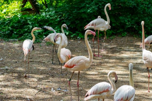 川の近くの美しいピンクのフラミンゴの群れ。 Premium写真