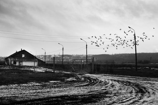 Стая птиц, летящих над снежной дорогой возле деревянной хижины Бесплатные Фотографии