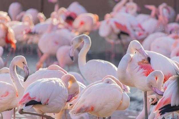 動物の聖域の池の岸を歩いているフラミンゴの群れ 無料写真