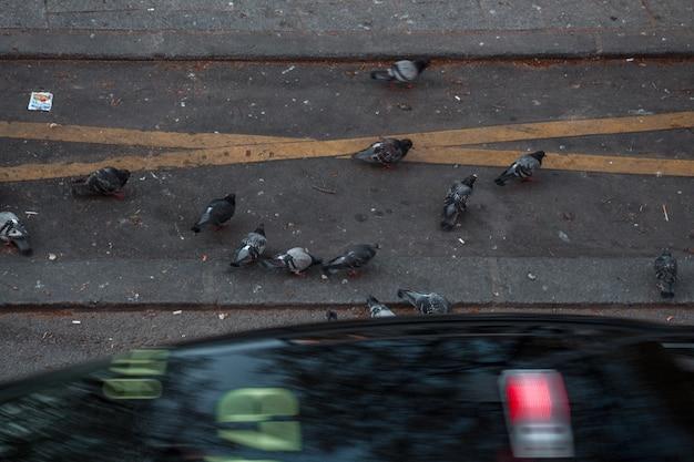 Стая голубей на бетонной дороге Бесплатные Фотографии