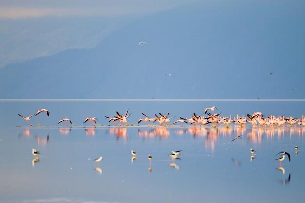 タンザニアのマニヤーラ湖からのピンクのフラミンゴの群れ Premium写真