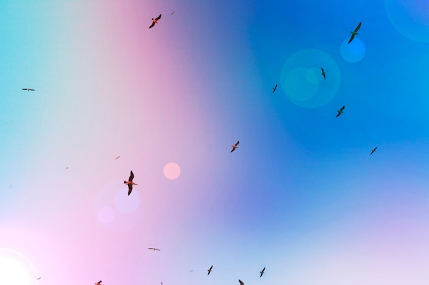 A flock of seagulls in flight Premium Photo