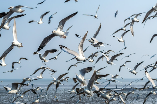 A flock of seagulls flying over sea Free Photo