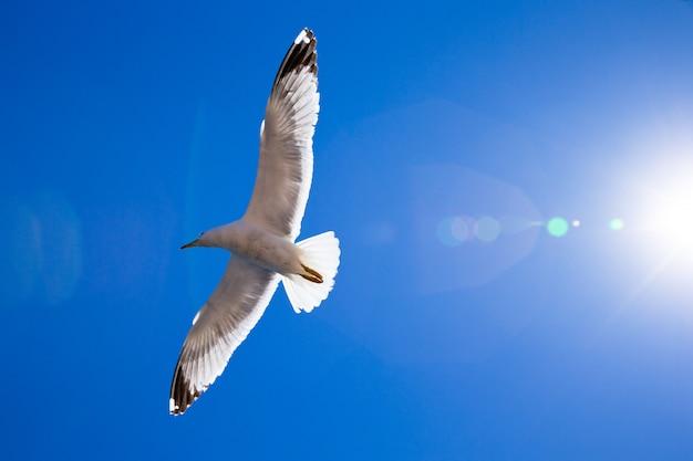 Flock in sky Premium Photo