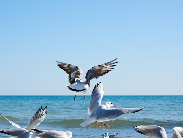 Flock of white gulls flies on the sea shore on a summer day Premium Photo
