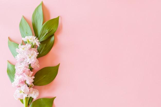 Цветочная композиция на ветке сусла и цветок матиолы на розовом фоне бумаги Premium Фотографии