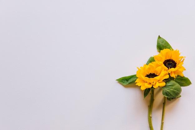 ひまわりの花の背景 Premium写真
