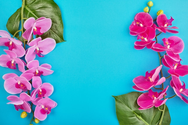 Floral backgroundtropical pink orchids on blue background. copy space Premium Photo