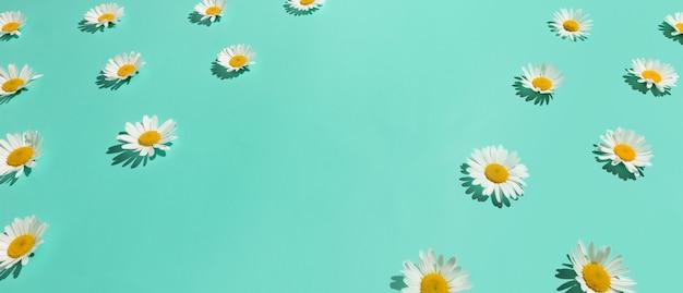 Цветочные рамки много ромашки цветы на фоне абстрактных яркий мятный зеленый. копировать пространство изометрический вид. Premium Фотографии