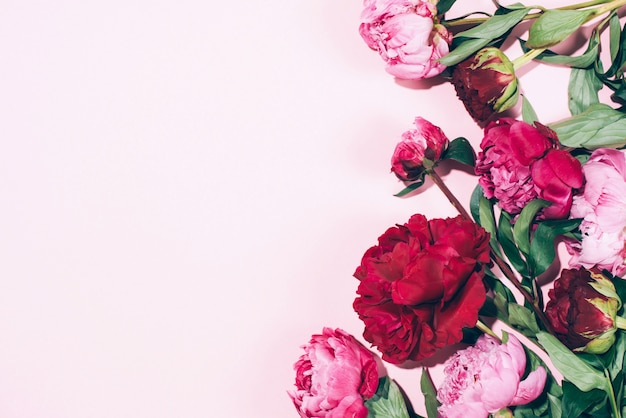 Floral frame. pink peonies with hard shadow on pastel background Premium Photo