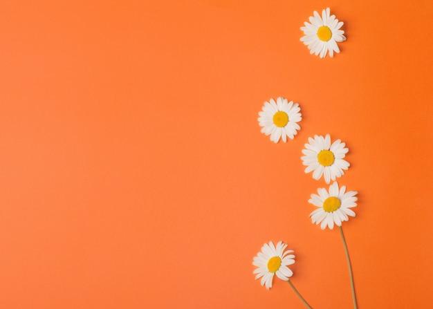 Цветочный оранжевый фон с ромашками Premium Фотографии