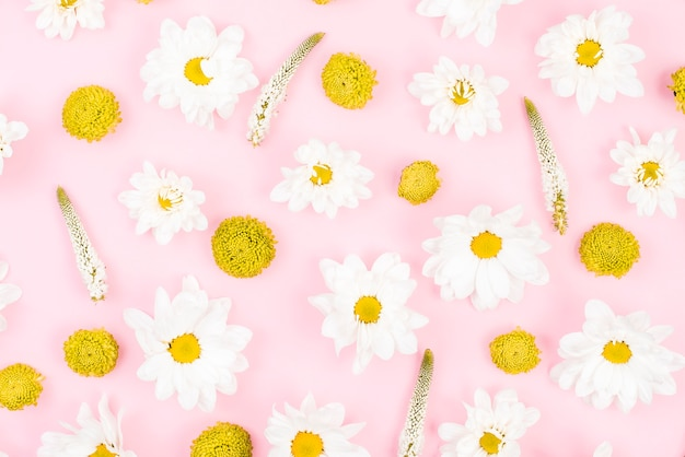 Floral pattern made with white and yellow flowers on pink ...