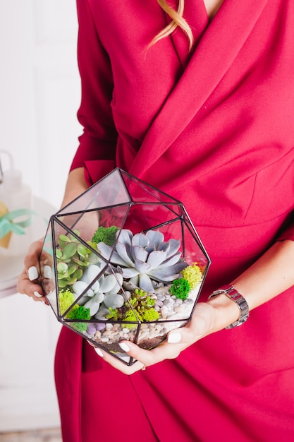 Florarium, composition of succulents, stone, sand and glass, element of interior,  home decor, glass terarium Premium Photo