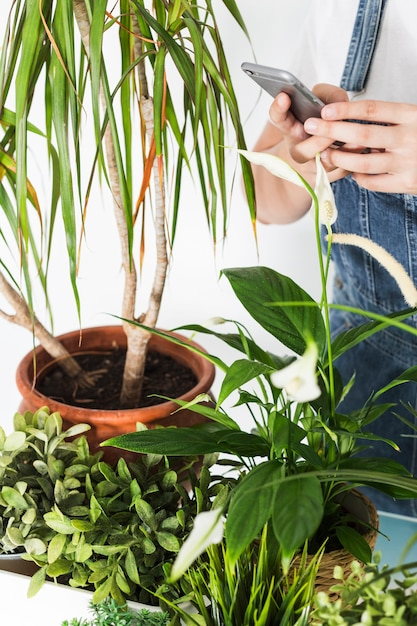 Florist hand using cellphone near potted plants Free Photo